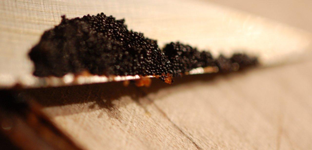 Caviar preparándose