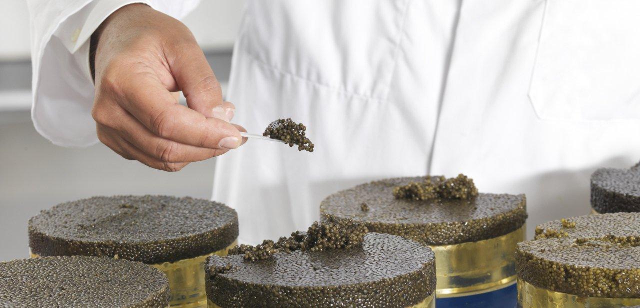 Detalle de latas de 10 kilos de caviar Petrossian
