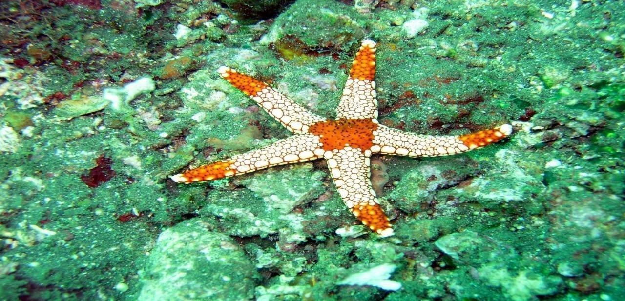 Estrella de mar Maldivas