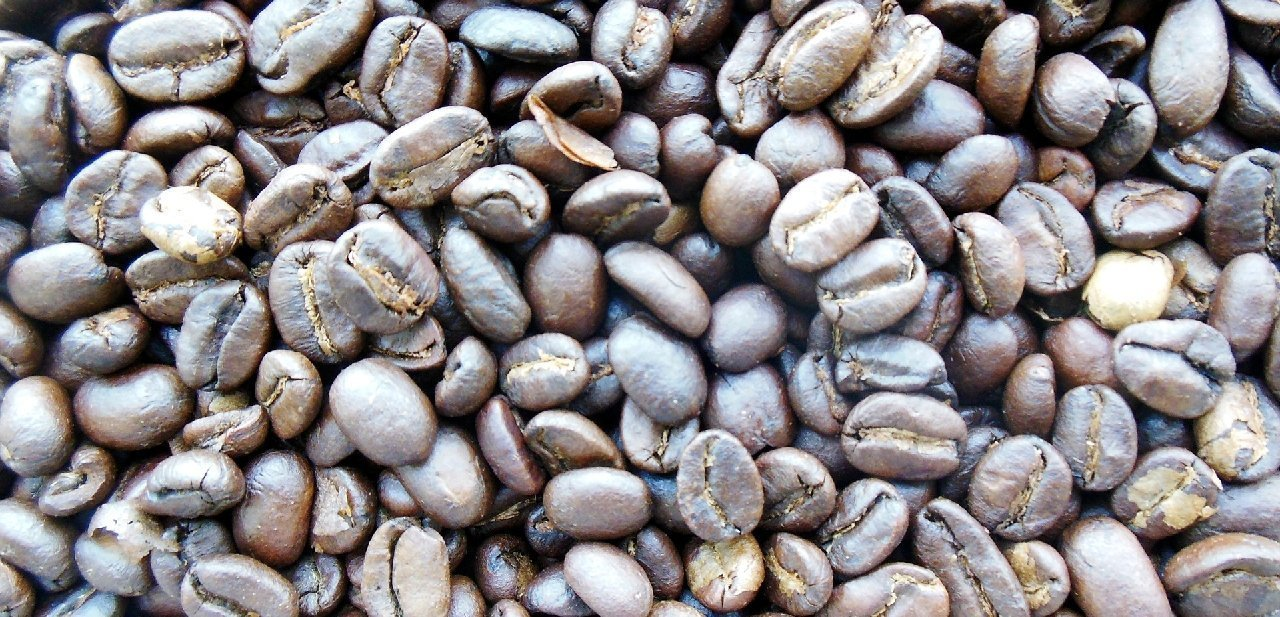 Granos de café kopi luwak