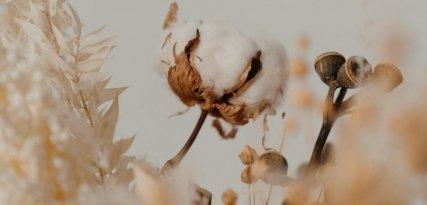 Algodón egipcio: las singularidades de un tejido con un valor especial