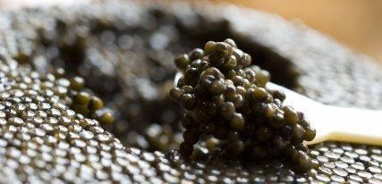 Caviar House & Prunier, los expertos en caviar