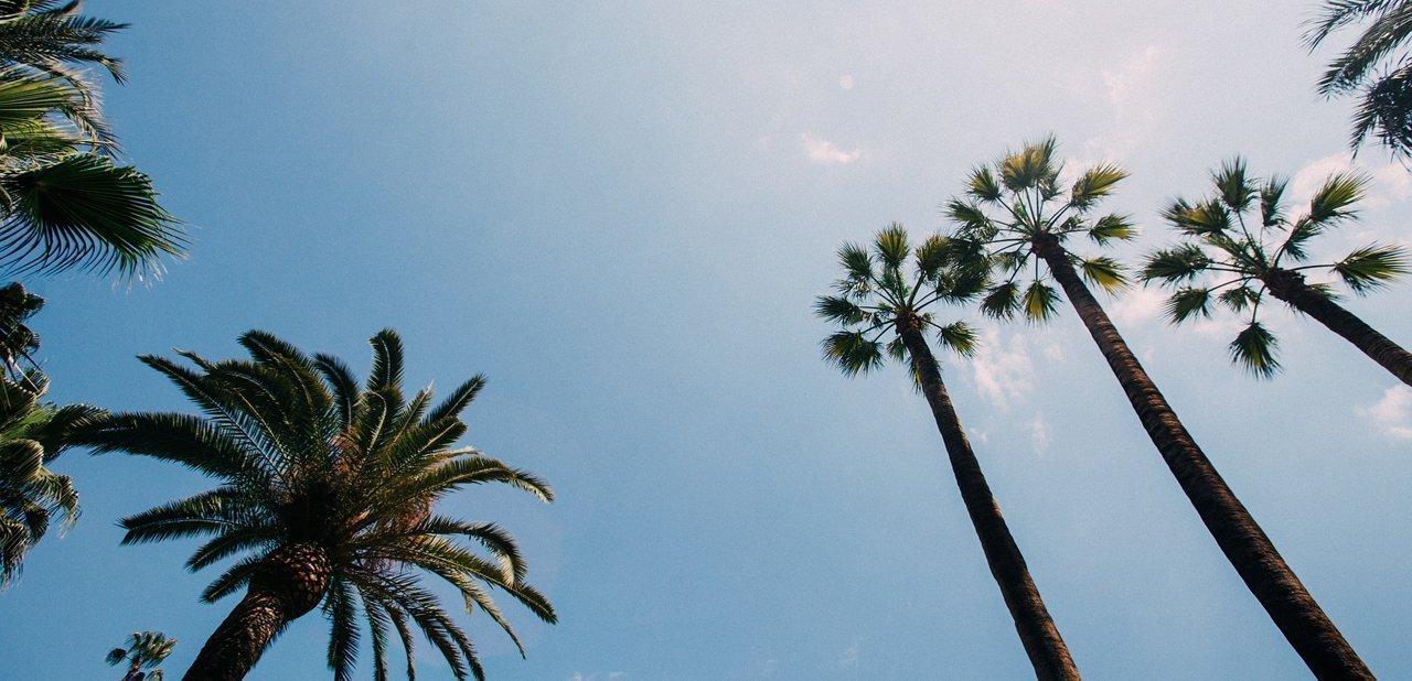 Palmeras de una isla paradisíaca
