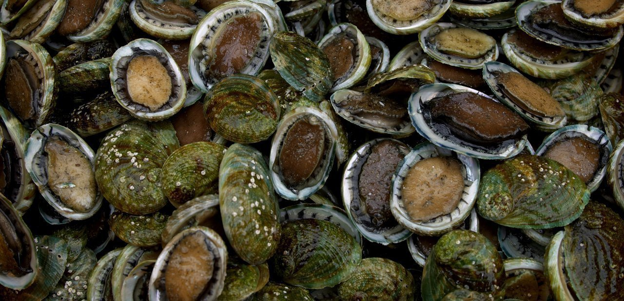 Varios abalones juntos